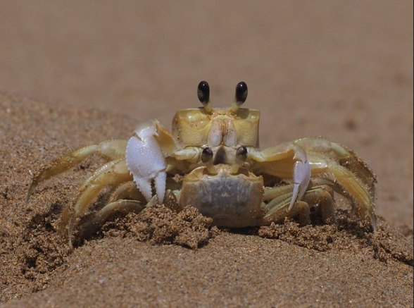 Sex on the Beach-Cangrejos